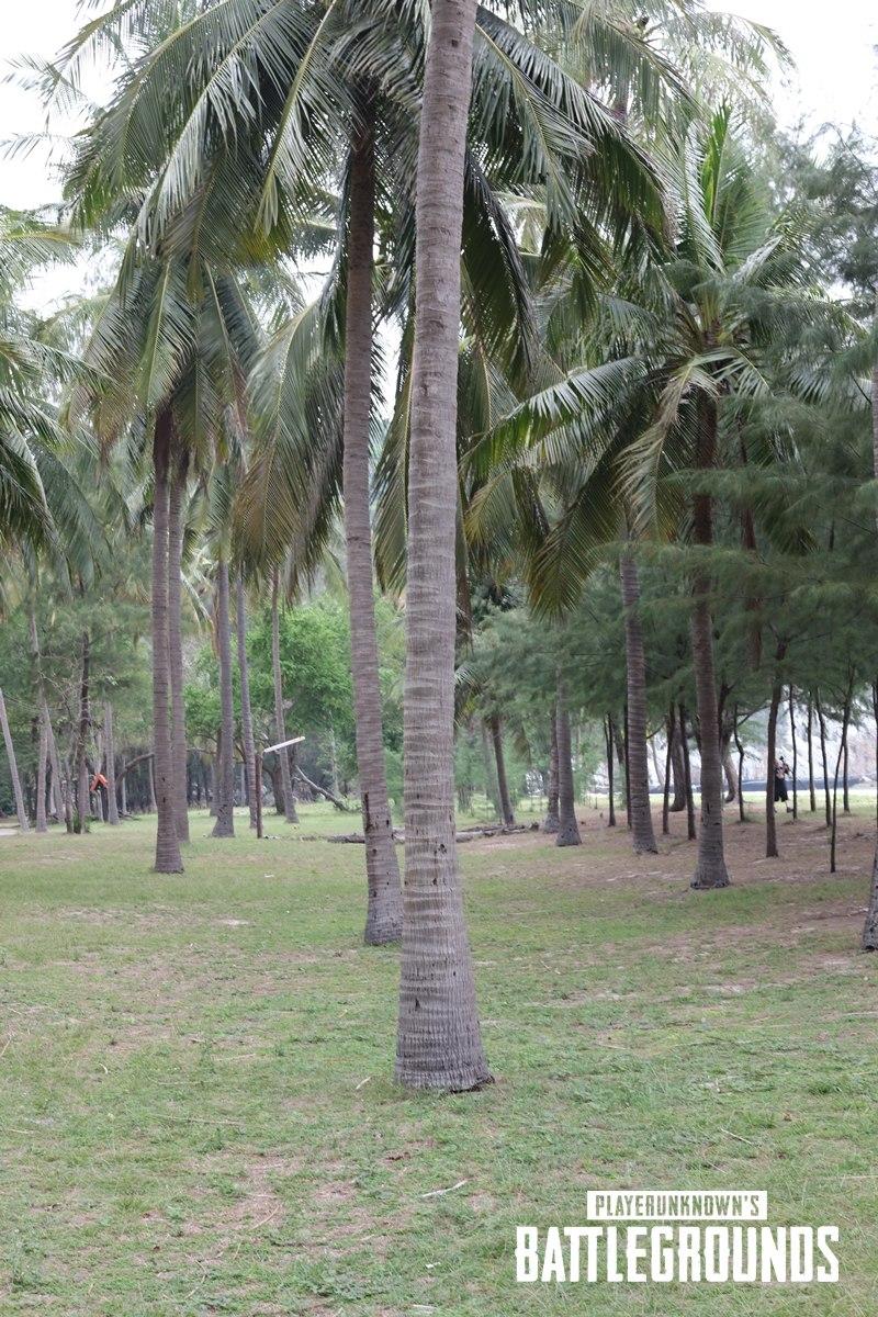 PUBG Пальмы
